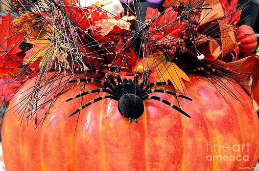 Maria Urso  - The Harvest Spider