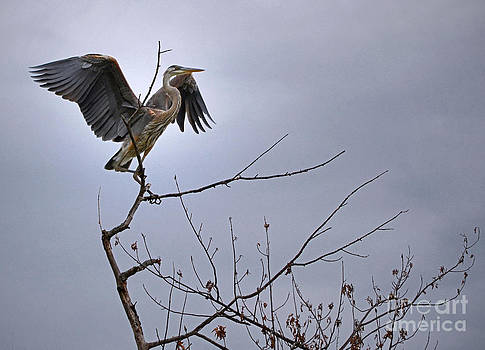 The Heron Has Landed by Sue Stefanowicz