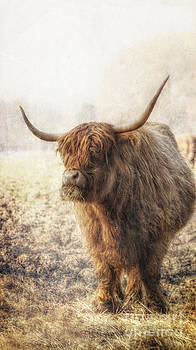 The Highlands Cow by Lee-Anne Rafferty-Evans