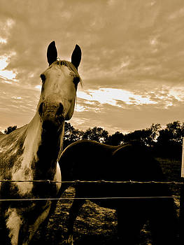 The Horses-curious by Tammy Olson