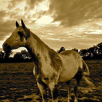 The Horses-Gallant by Tammy Olson