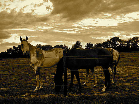 The Horses-pasture by Tammy Olson