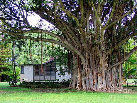 Mary Deal - The House Beside the Banyan Tree