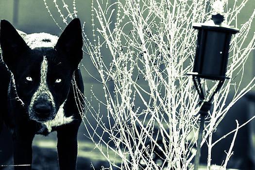 The Husky Hunt by Nicholas Monzo