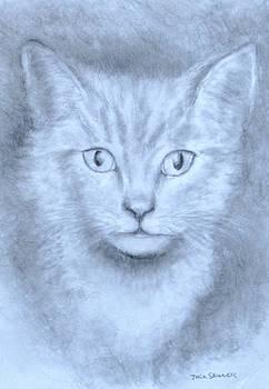 The Kitten by Jack Skinner