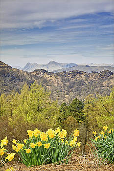 The Langdales from Tarn Howes by George Hodlin