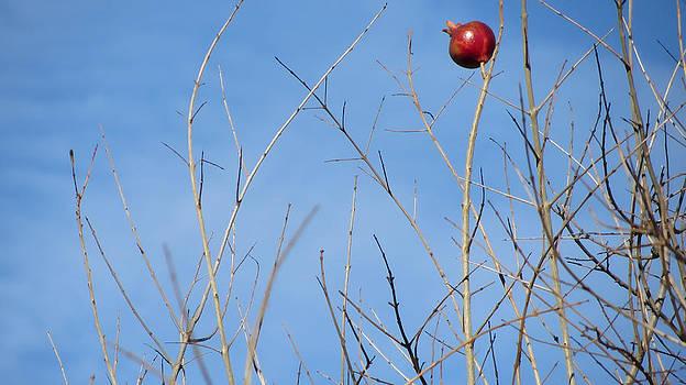The last Pomegranate by Zsuzsanna Szugyi