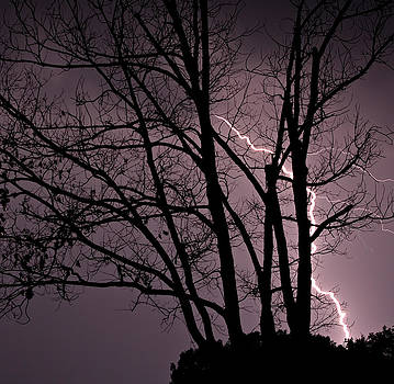 The Lightning Tree by Tim Scullion