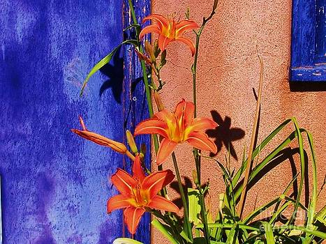 The Lillies By My Back Door by Donna Parlow