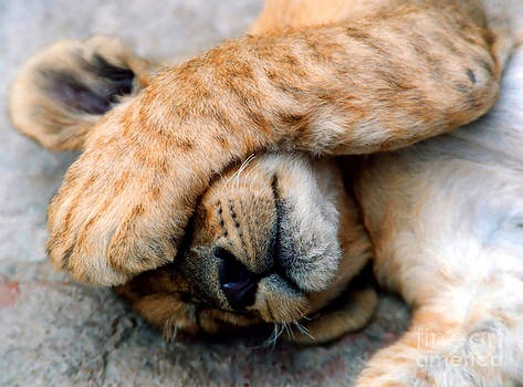 The Lion Sleeps by Serena Bowles