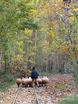 The Little Shepherd by Issam Hajjar