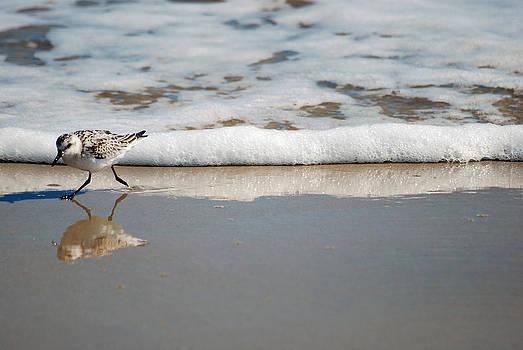 The Lone Sandpiper by Lori Tambakis