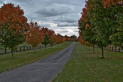 The Long and Lovely Driveway by Donna Harding