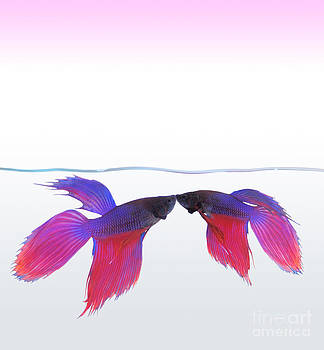 The love of fishing. by Tawatchai Sanajai