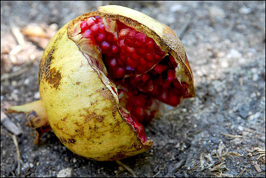 The Magic Fruit by Gunnar Boehme