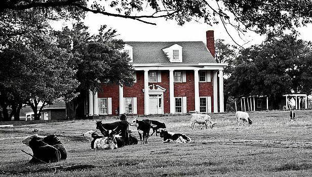 The Manor by Elizabeth Hart