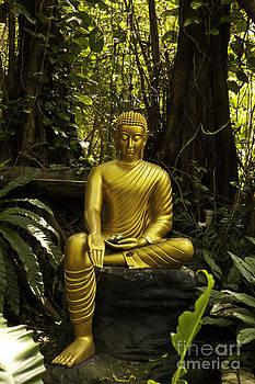 The Mercy of Buddha by Wittaya Uengsuwanpanich