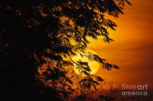 The morning fire on the sky... by Christine Kapler