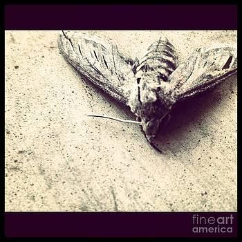 The Moth by Matt Kennedy