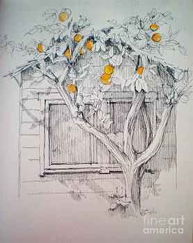 The Orange Tree by Dominique Eichi