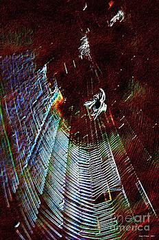 Maria Urso  - The Orb Weaver