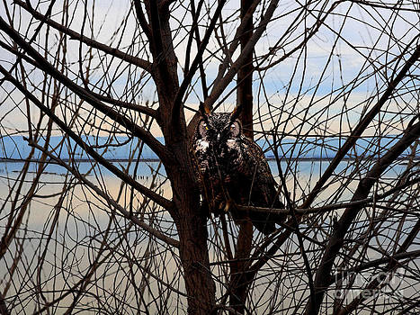 Wingsdomain Art and Photography - The Owl At The Waters Edge