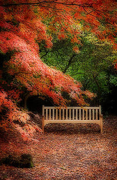 The Park Bench by Paul Davis
