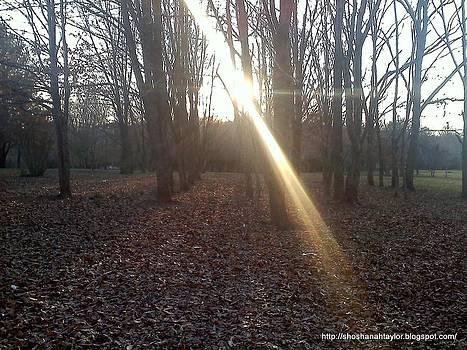 The Park3 by Shoshanah Taylor