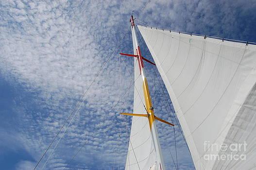 The Perfect Sail by Tina Shamay