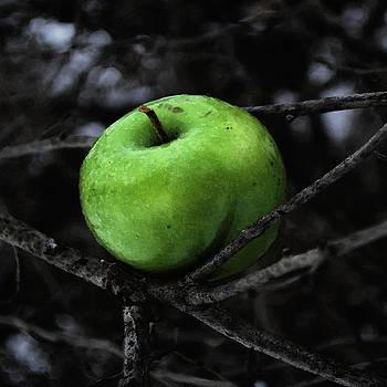 The Poison Apple by Sharon Kalstek-Coty