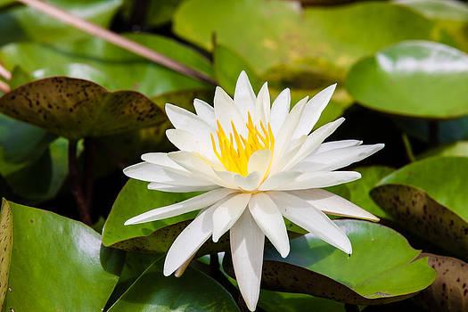 The Pond by Alhaji Samura