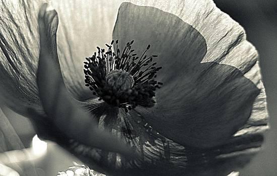Marysue Ryan - The Poppy