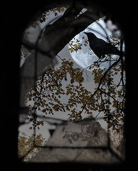 The Raven by Marie  Gale
