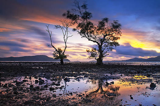 The Reflex Of Tree In Sunset by Arthit Somsakul