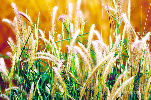 The ropical grassland by Tawatchai Sanajai
