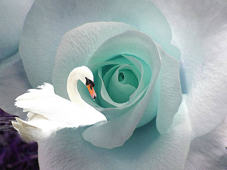 The Rose and The Swan by Robin Hewitt