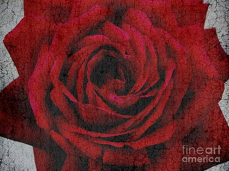 The rose by Anne Seltmann