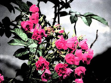 The Rose Bush by Anna McElhany