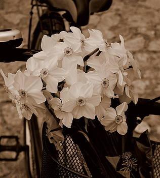 The scent of memories by Marija Djedovic