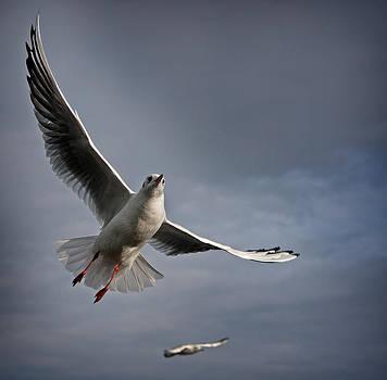 The Seagull by Paul Davis