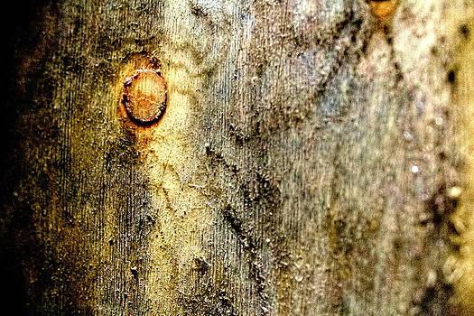 Sandra Pena de Ortiz - The Secrets of Wood