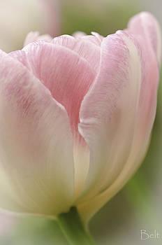 Christine Belt - The Softness of Pink
