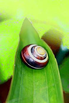 the stairway to Snail Heaven by Shiladitya Sinha