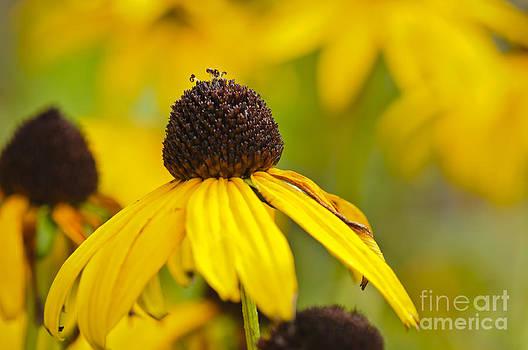 Christine Kapler - The Sunny Flowers of the Summer...