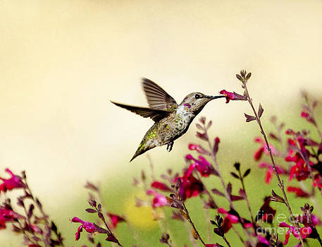 Susan Gary - The Tempest Hummingbird
