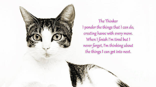 Andee Design - The Thinker Pink