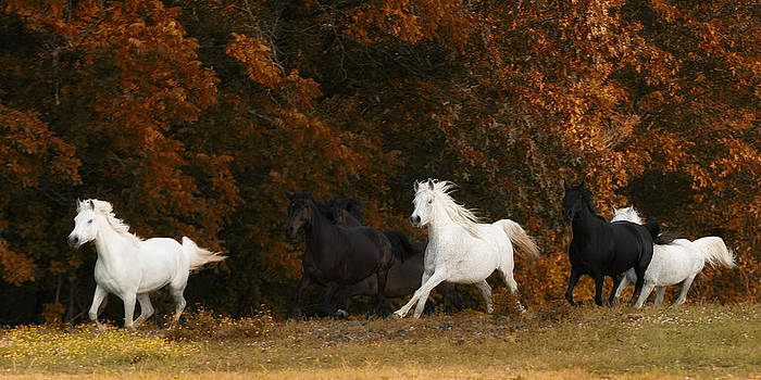 The Thracian Mares by Ron  McGinnis
