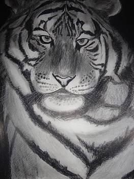 The Tiger by Subodha Nayak