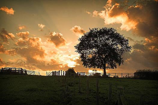 The Tree by Paul Davis
