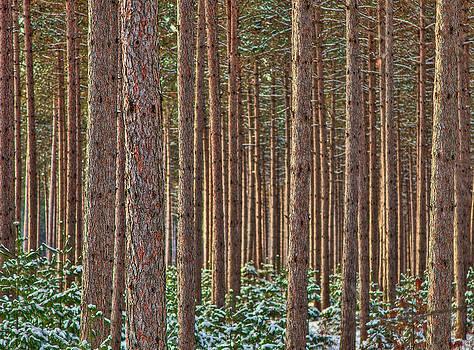 The Trees by David Wynia
